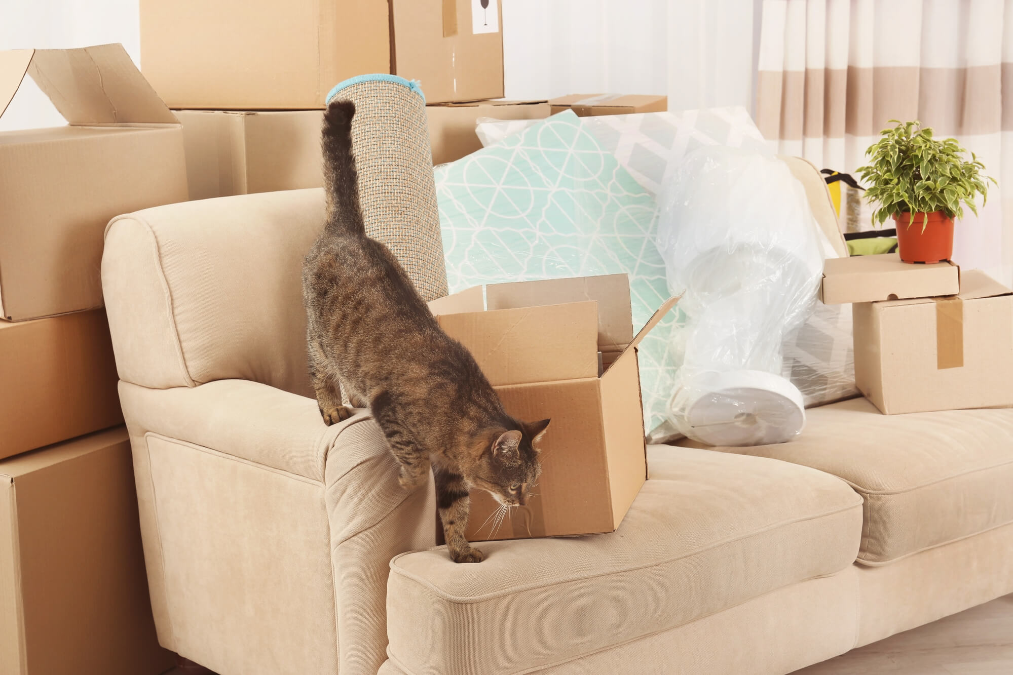 How To Move With Pets Safely And Effectively